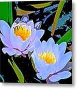 Pond Lily 17 Metal Print