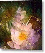 Pond Lily 23 Metal Print