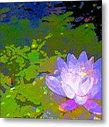 Pond Lily 29 Metal Print
