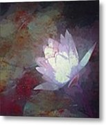 Pond Lily 32 Metal Print