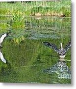 Pond Pairs Dancing Metal Print