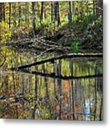 Pond Reflects Metal Print