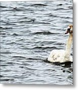Pond Swan Metal Print