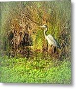 Pond Wildlife Metal Print