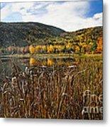 Pond With Autumn Foliage  Metal Print