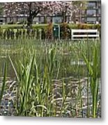Pond With Reed Metal Print