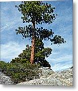 Ponderosa Pine And Granite Boulders Metal Print