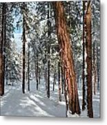 Ponderosa Winter Metal Print