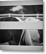 Pony Farm 2011 Metal Print