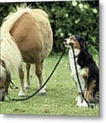 Pony With Lead Rope Held By Sitting Dog Metal Print