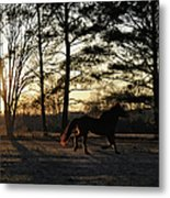 Pony's Evening Pasture Trot Metal Print
