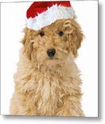 Poodle In Christmas Hat Metal Print
