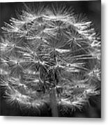 Poof - Black And White Metal Print
