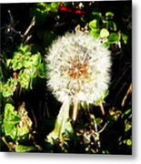 Poof I Will Be Gone Metal Print