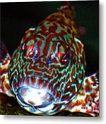 Poopaa Hawaiian Hawk Fish Metal Print