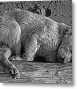 Pooped Puppy Bw Metal Print