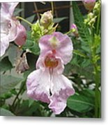 Poor Man's Orchid Metal Print