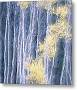 Poplar Trees In Autumn, Grey Creek Metal Print