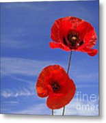 Poppies 02 Metal Print by Giorgio Darrigo