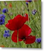 Poppies And Cornflowers Metal Print