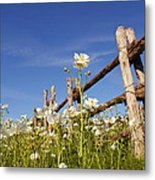 Poppies And Fence 2am-110209 Metal Print