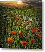 Poppies Art Metal Print