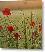Poppies At Sundown Metal Print