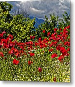 Poppies In Remembrance Metal Print