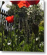 Poppies In The Sun Metal Print by Stephen Norris