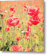 Poppies In Tuscany - Italy Metal Print
