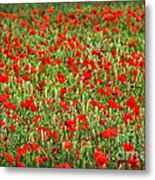 Poppies In Wheat Metal Print