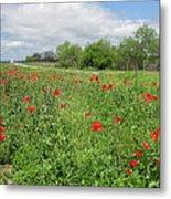 Poppies Near Hondo Metal Print