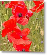 Poppies Vi Metal Print