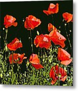 Poppy Art Metal Print