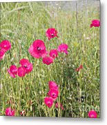 Poppy Blush Metal Print