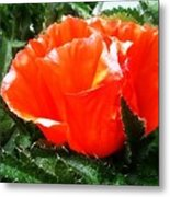 Poppy Flower Metal Print by Heather L Wright