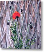 Poppy In The Wild Metal Print