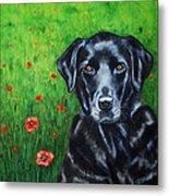 Poppy - Labrador Dog In Poppy Flower Field Metal Print