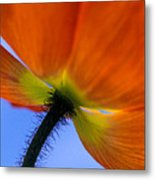 Poppy Portrait Metal Print