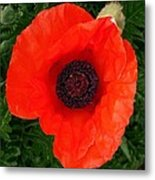 Poppy Of Remembrance  Metal Print
