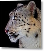 Portrait II Of A Snow Leopard Metal Print