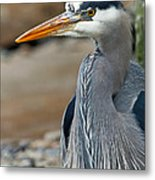 Portrait Of A Blue Heron Metal Print