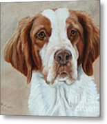 Portrait Of A Brittany Spaniel Metal Print