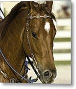 Portrait Of A Brown Horse Metal Print