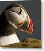 Portrait Of A Colorful Puffin Iceland Metal Print