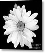 Portrait Of A Daisy Metal Print