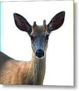 Portrait Of A Deer Metal Print