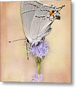 Portrait Of A Gray Hairstreak Metal Print