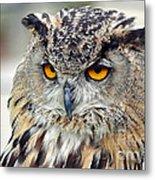 Portrait Of A Great Horned Owl II Metal Print