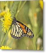 Portrait Of A Monarch Metal Print